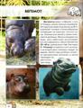 Зображення Мир вокруг нас. Детеныши животных. Фотоэнциклопедия
